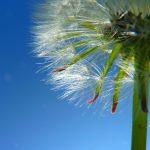 allergie rhinitis vitamin d