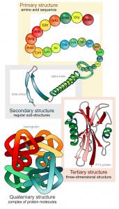 aminosaeuren-proteine