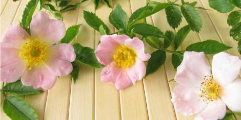 Cremes mit Rosenöl straffen die Haut