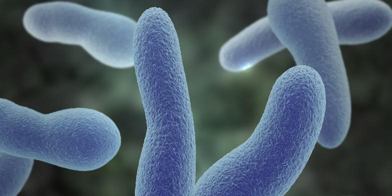 Diphtherie ist die Ursache eine Infektion mit einem stäbchenförmigen Bakterium