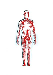 gefaesse vitamine D kreislauf