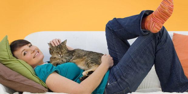 Katzen lösen oft eine Tierhaarallergie aus