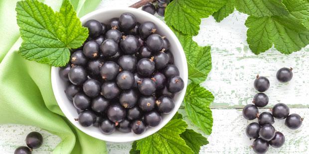 Schwarze Johannisbeere enthält Vitamin C