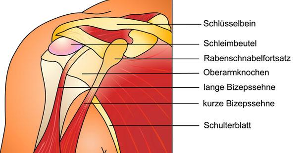 Schleimbeutel sind überall dort vorhanden, wo Knochen direkt unter der Haut liegen